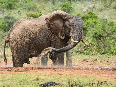 elephant-x640y480